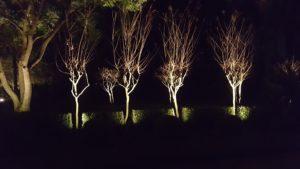 Landscape Lighting Spring