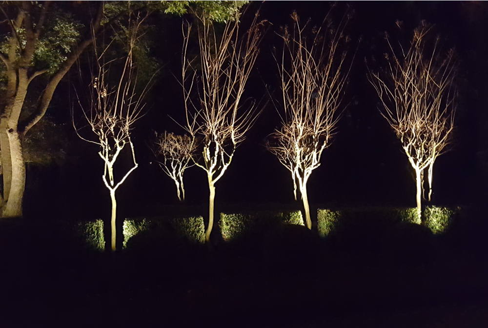 groupoftrees